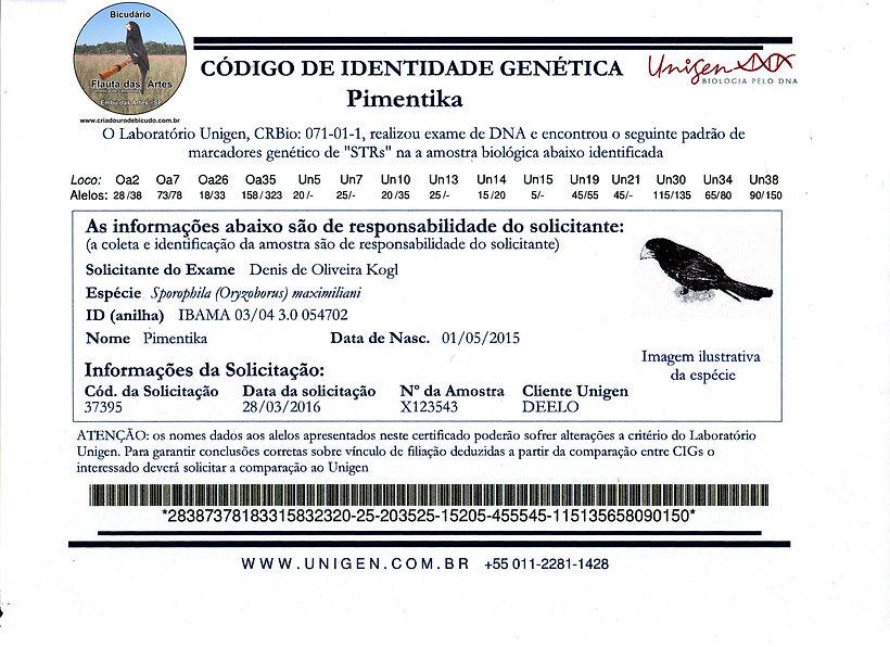 Bicudário Flauta das Artes   Bicuda Pimentika   CIG