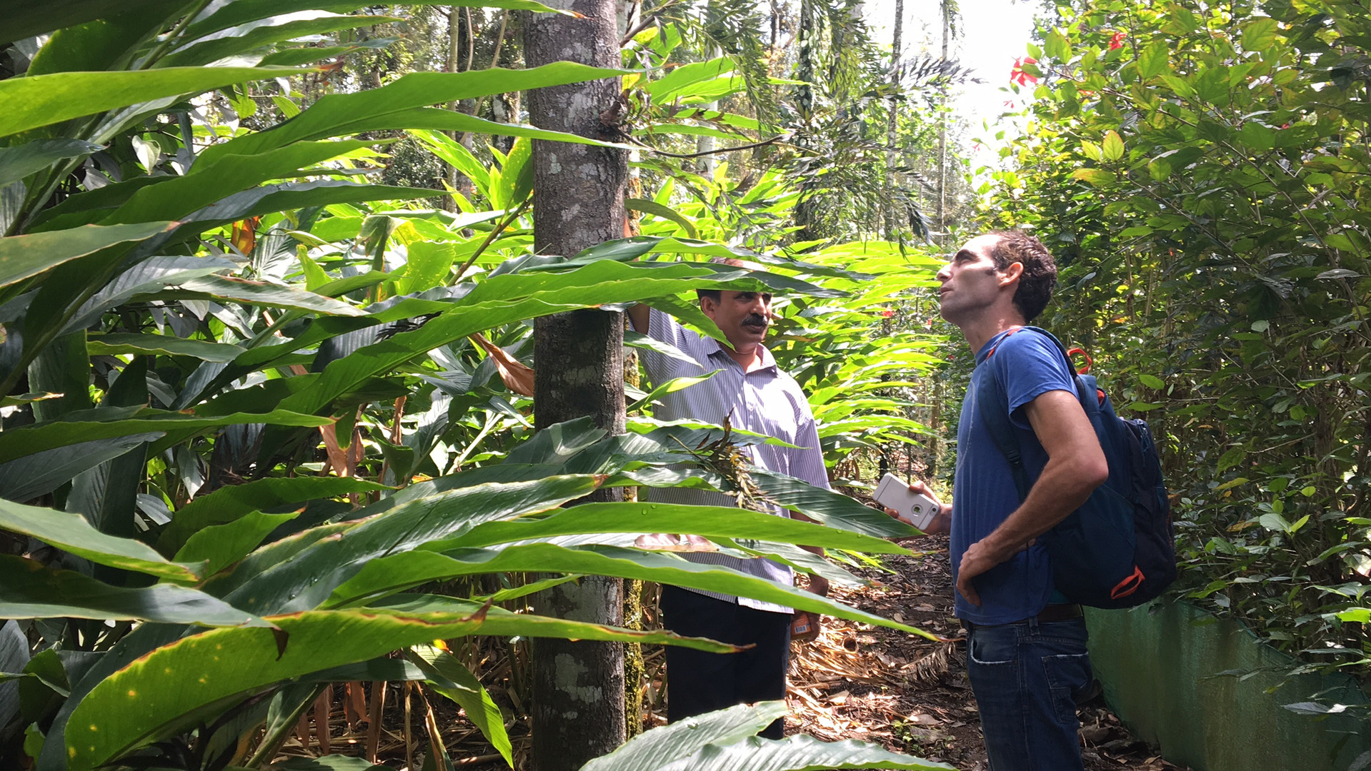 Sourcing Cardamom in India.