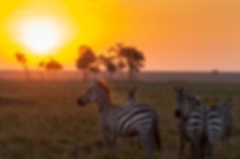 Sunset Zebras.jpg