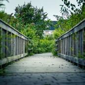 _Discipline is the bridge between goals