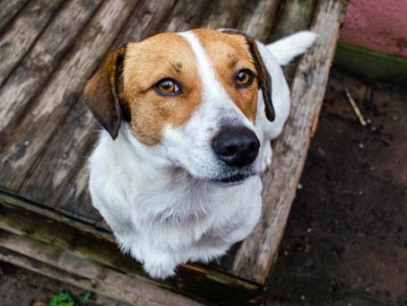 5 tips voor eindeloos veel mooie foto's van je hond