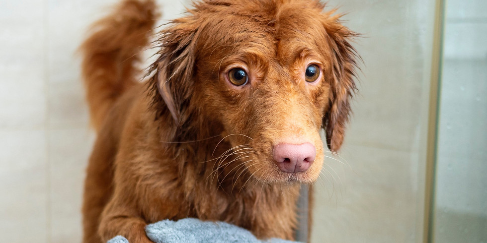 UITGESTELD - Vachtverzorging voor je hond