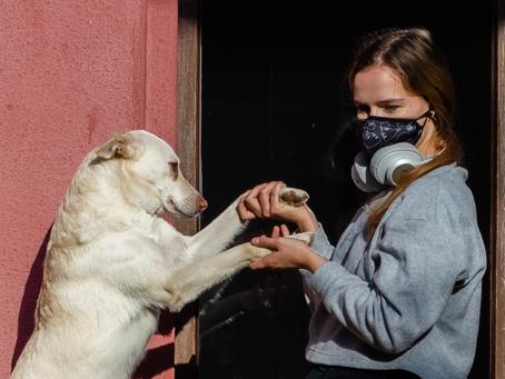 Overwinteren met je hond