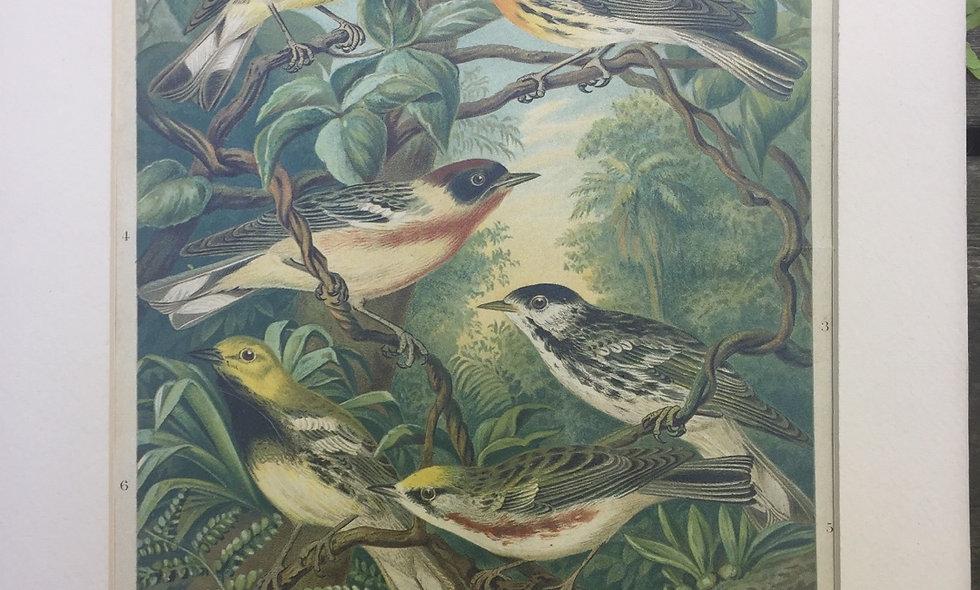 """Warblers in their winterquarters"" antique german plate"