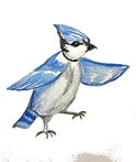 bluejay12%3A15_edited.png