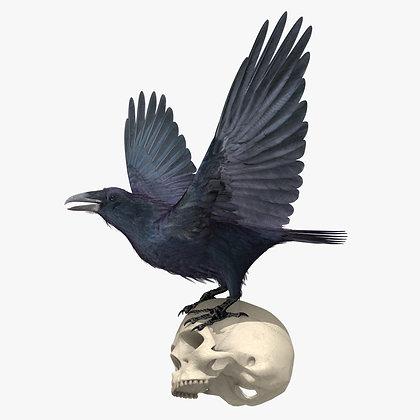 Raven - Lightwave