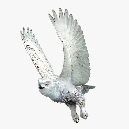 Snowy Owl - MAX