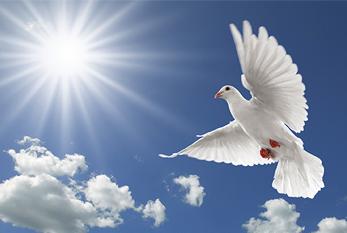 World Peace !