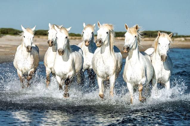 Seven Horses of Abundance Light Code Activation (Poster)