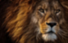 close-up-photo-of-lion-s-head-2220336.jp