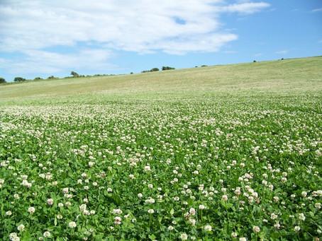 How beneficial bacteria help legumes fix nitrogen into the soil