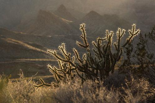 DESERT TRIMMINGS