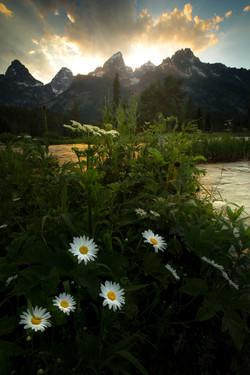 teton flower 2.jpg