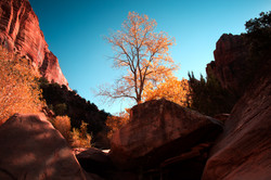 Zion National Park - Fall Endings