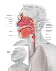 Anatomy Teaching Tool