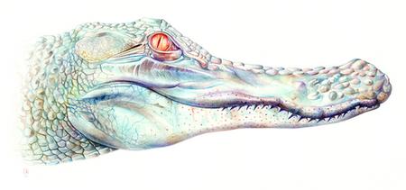 Albino Aligator.png