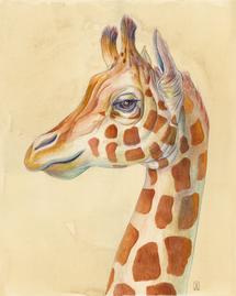 Giraffe Profile.png