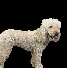Dog 5 Before_Edit.jpg
