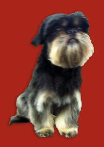 Dog 2 After_Edit.jpg