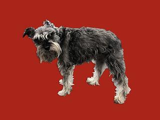 Dog 6 Before_Edit.jpg