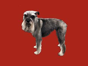 Dog 6 After_Edit.jpg
