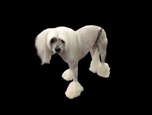 Dog 4 After_Edit.jpg