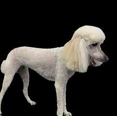 Dog 5 After_Edit.jpg