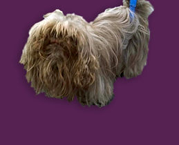 Dog 1 Before_Edit (1).jpg