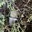 Thumbnail: light coloured smoky with phantom crystals size 8.5
