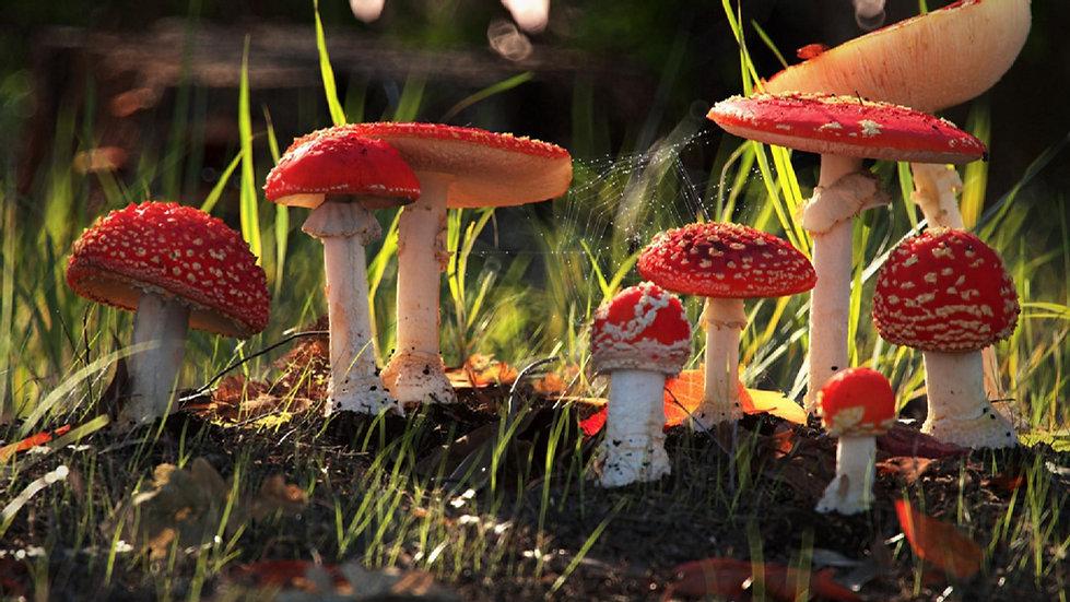csm_mushroom_03fb499521.jpg