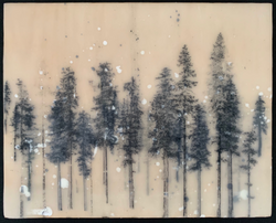 Forest Sketch, North Shore