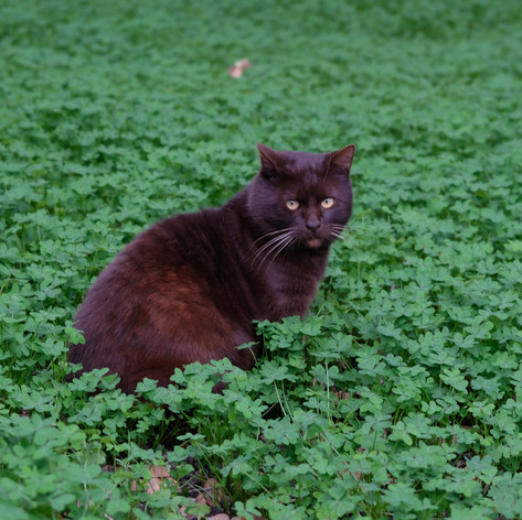 Kitty in the green