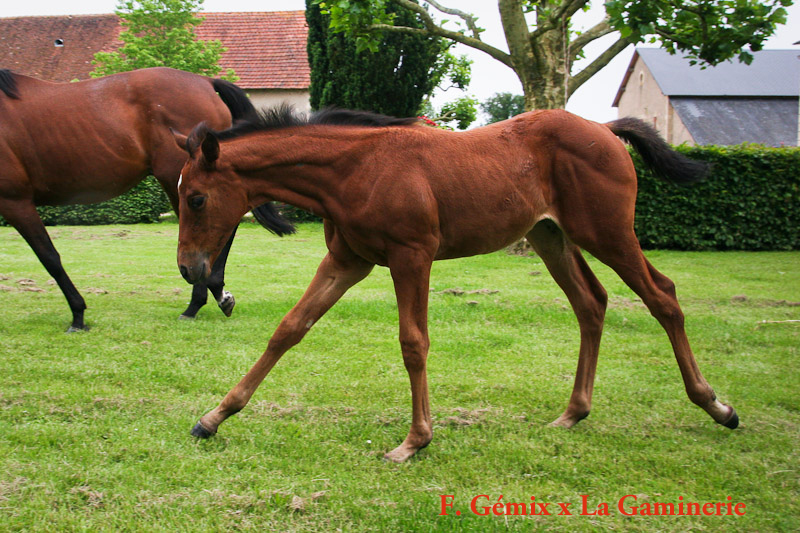 foal La Gaminerie x Gémix