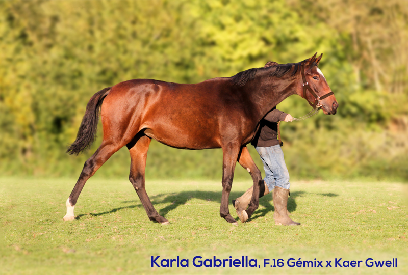 Kaer Gabriella yearling par Gémix