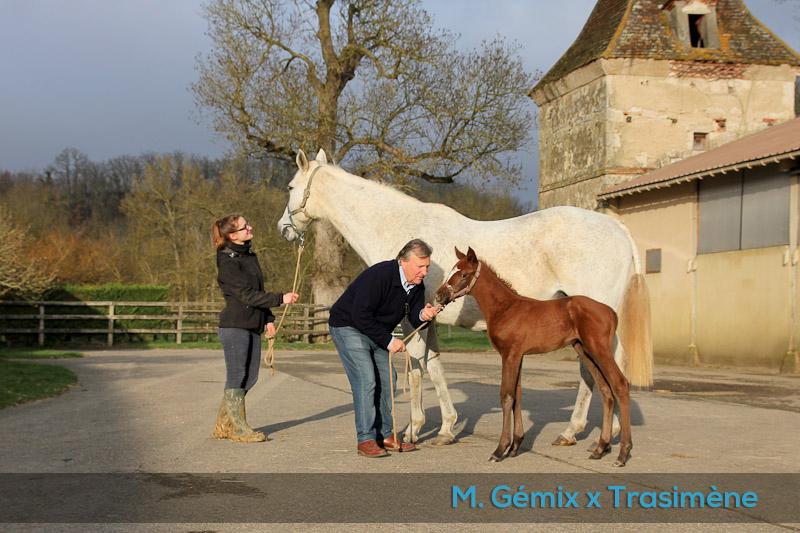 Foal Trasimène x Gémix