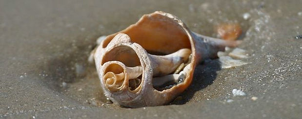 broken shells.jpg