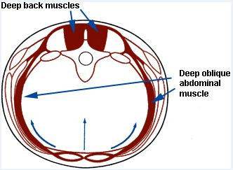 Cross Section Abdominals, Low Back, Chiropractor, Deep Back Muscles