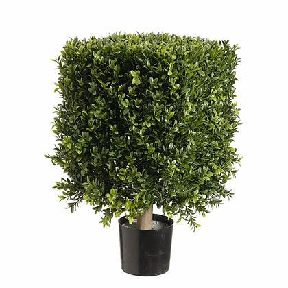 Ficus Topiary Square