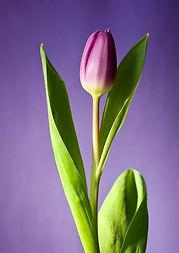 flower jpeg c.jpg