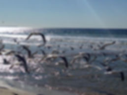 Birds LA_SWestwood