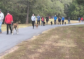 Group obedience class and pack walks in Charlotte NC
