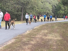 Dog training in Charlotte NC pack walks and group obedience class