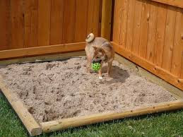 The dangers of SAND for a dog...