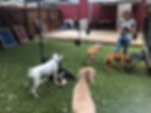Mary pic with dogs in turf yard.jpg