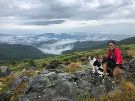 Hiking Roan Mountain with dogs and camping with dogs