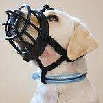 Baskerville muzzle.jpg