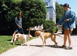 """5 reasons why I don't allow my dogs to """"visit"""" with other strange dogs."""