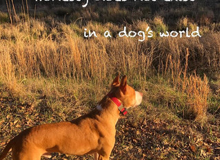Honesty Does Not Exist in a Dog's World