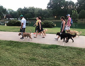 Pack walks with dogs Charlotte NC