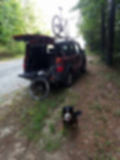 Bernese Mountain Dog and Borde Collie cross dog training